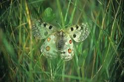 la_nuit_tous_les_papillons_sont_ils_gris